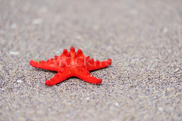 Rode zee star strand water vis zee Stockfoto © byrdyak