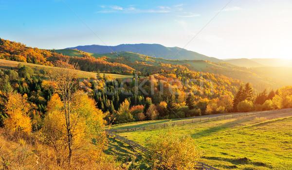 Outono paisagem montanha colorido floresta árvore Foto stock © byrdyak