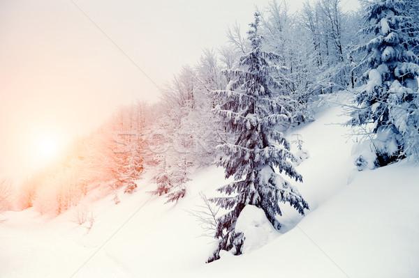 Kış manzara güzel kar kapalı ağaçlar Stok fotoğraf © byrdyak