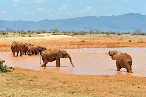 Stock photo: Elephant