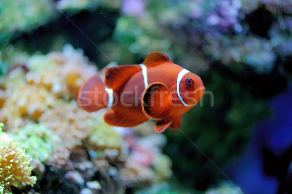 Underwater scene Stock photo © byrdyak