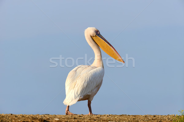 Blanco vuelo lago Kenia África Foto stock © byrdyak