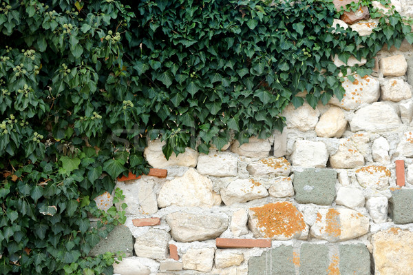 Stone wall with Ivy Stock photo © byrdyak
