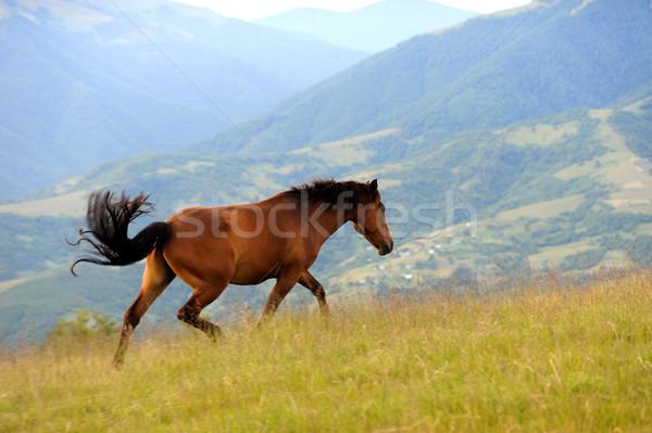 Horse in mountain Stock photo © byrdyak