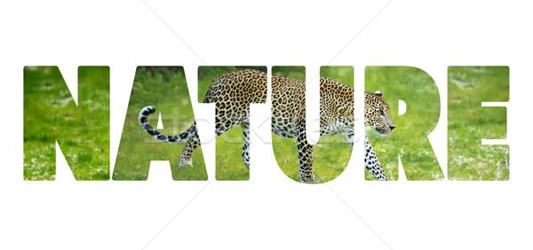 Palabra naturaleza cartas gato fondo belleza Foto stock © byrdyak