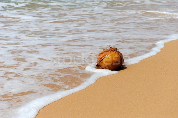 Foto d'archivio: Cocco · spiaggia · tropicale · nessuno · spiaggia · Ocean