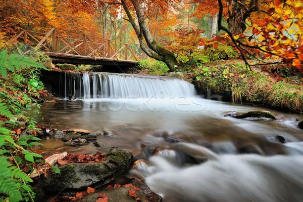 ősz erdő vízesés kövek citromsárga levelek Stock fotó © byrdyak