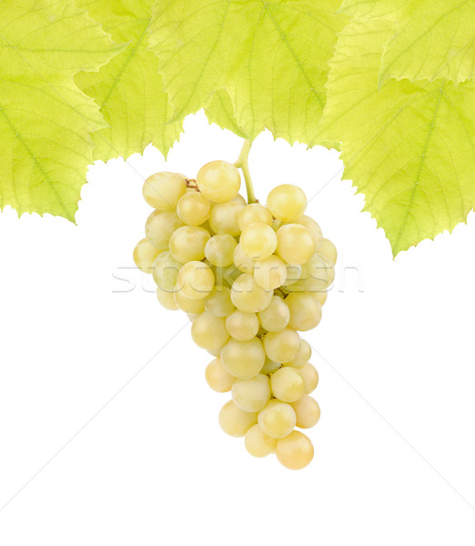 Fresh green grapes with leaves Stock photo © byrdyak