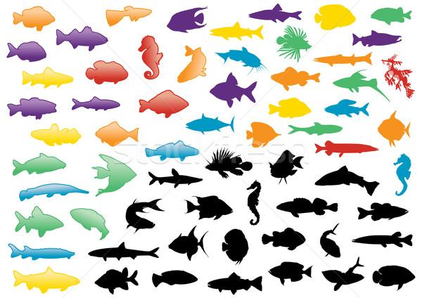 Balık siluetleri örnek ayarlamak tüm nesneler Stok fotoğraf © Bytedust