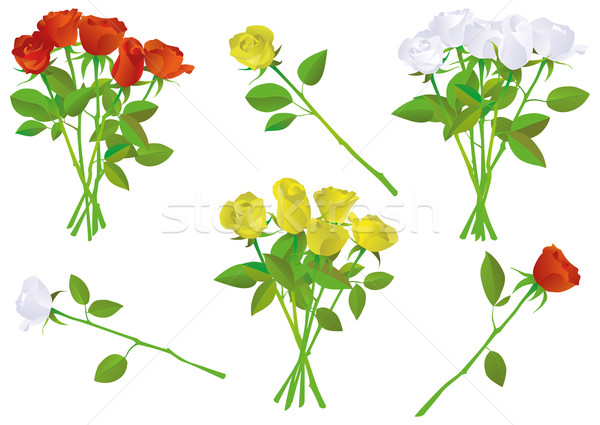 Colorful rose bouquet vector illustration set. Stock photo © Bytedust