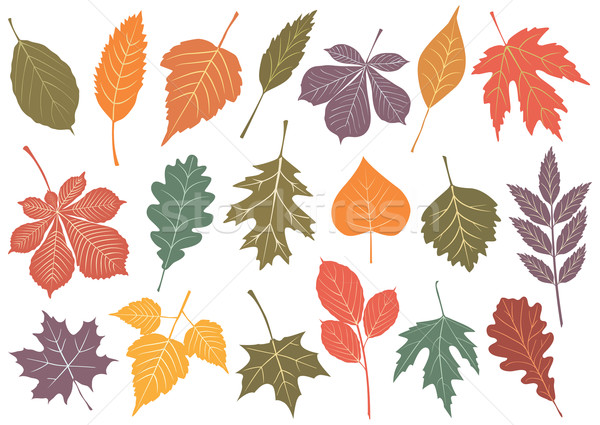 Stock photo: Vector illustration set of 19 autumn leaves.