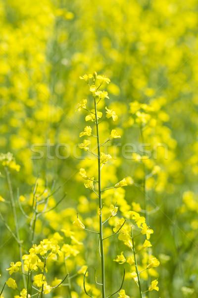 Campo natureza paisagem verão indústria Foto stock © c12