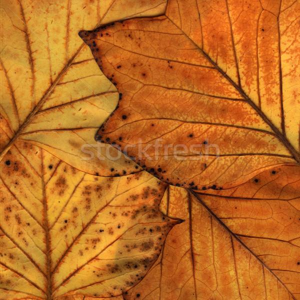 Folhas amarelo textura natureza folha Foto stock © c12
