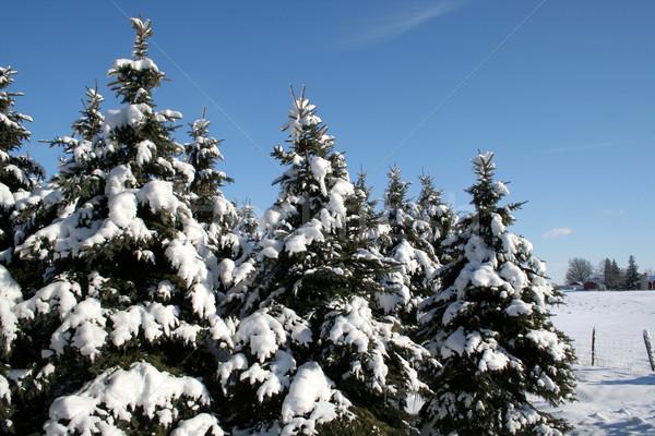 Foto stock: Neve · coberto · conjunto · blue · sky · céu · floresta