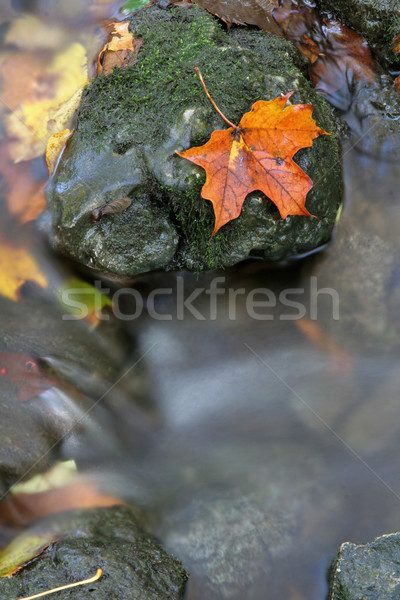 Orange Leaf on a Stone Stock photo © ca2hill