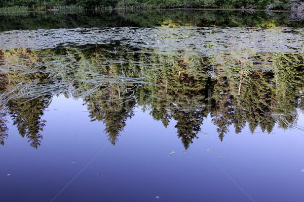Evergreen Reflection Stock photo © ca2hill