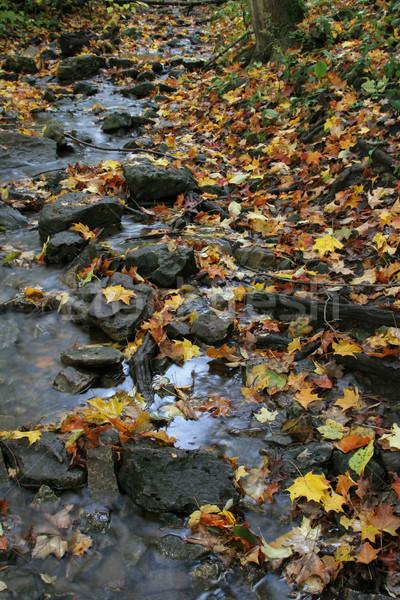 Foto stock: Caída · corriente · tiro · hojas · otono · rocas