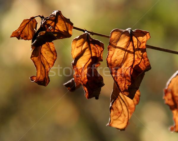 Narancs levelek öreg gally erdő természet Stock fotó © ca2hill