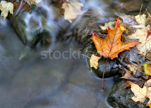 Stock photo: Orange Leaf and Stream