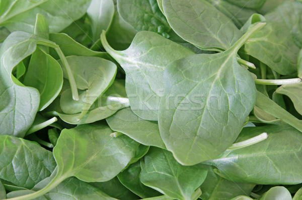 Healthy Green Spinach