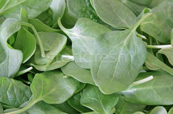 Gezonde groene spinazie bladeren shot zachte Stockfoto © ca2hill