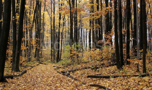 ősz nyom citromsárga narancs padló levelek Stock fotó © ca2hill