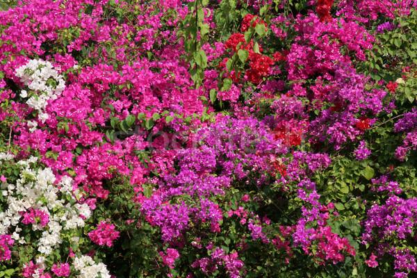 Flor tropical parede tropical flores fundo verde Foto stock © ca2hill