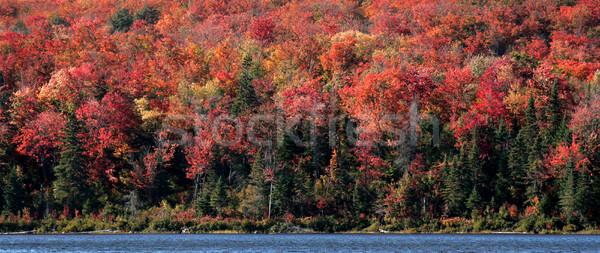 осень берега красивой парка природы Сток-фото © ca2hill