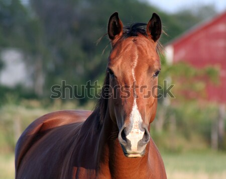 Face-to-Face Horse