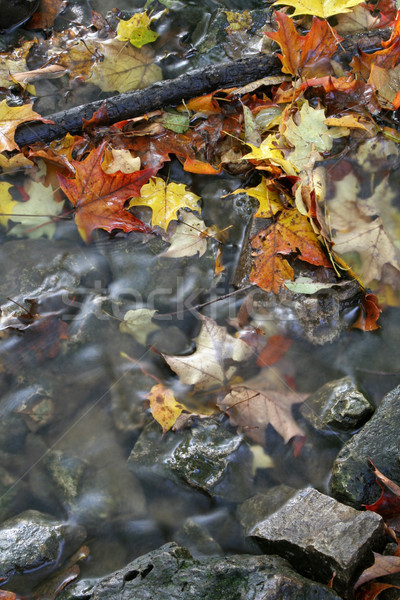 Fall Leaves in a Stream