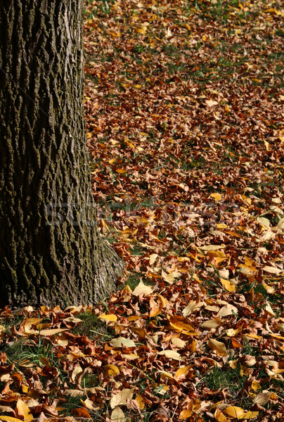 Lots of Leaves