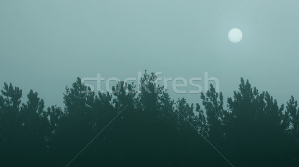 Blue Tree Line Hazy Sun Stock photo © ca2hill
