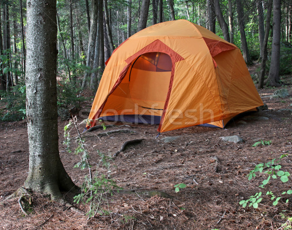 Orange Tent in the Woods Stock photo © ca2hill