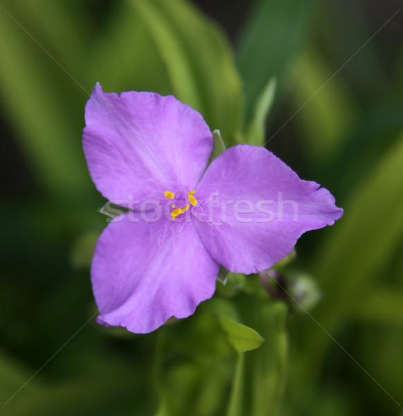Sole fascino fiore Foto d'archivio © ca2hill
