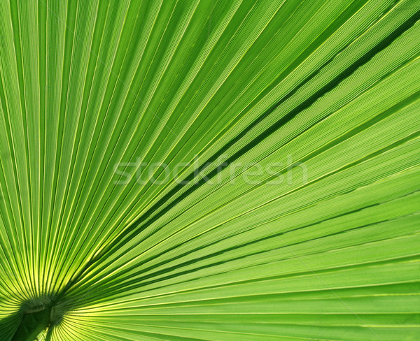Palm Leaf Upclose