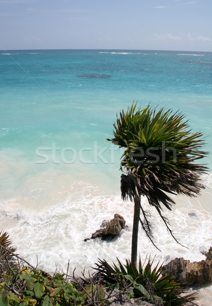 Jagged Carribbean Coast