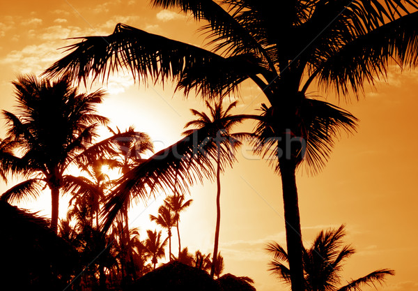 Tropical Palm Sunset Silhouettes Stock photo © ca2hill