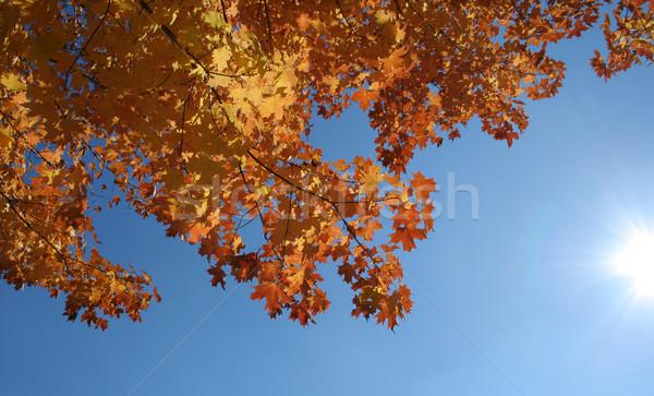 ősz fellobbanás juhar kék ég fényes nap Stock fotó © ca2hill