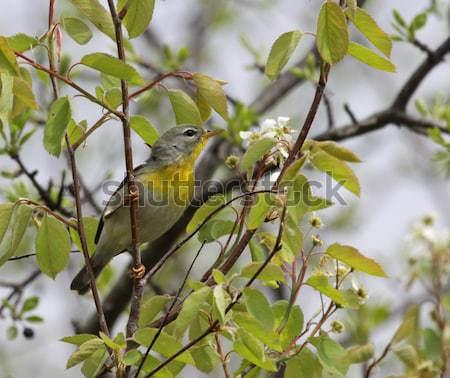 дерево выстрел парка Мэн США Сток-фото © ca2hill