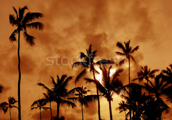 Palm Tree Silhouettes Stock photo © ca2hill