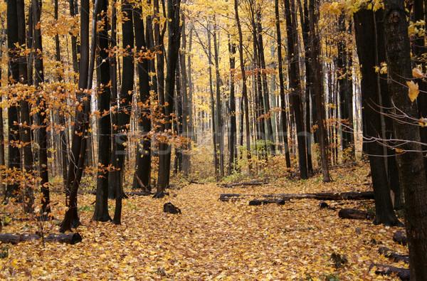 Stock photo: Autumn Path