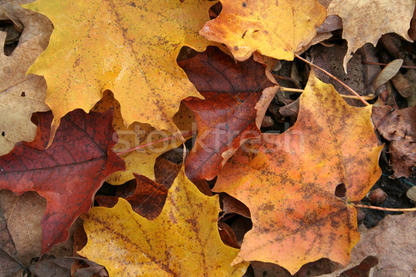 Stock photo: Fall Forest Floor Up Close
