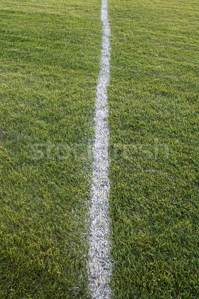 White Line, Green Field Stock photo © ca2hill