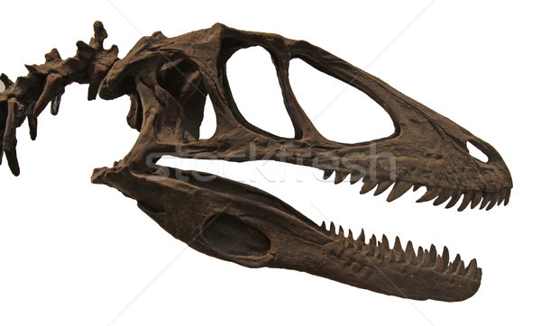 Deinonychus Skull Stock photo © ca2hill