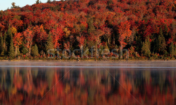 Algonquin Forest Reflection Stock photo © ca2hill