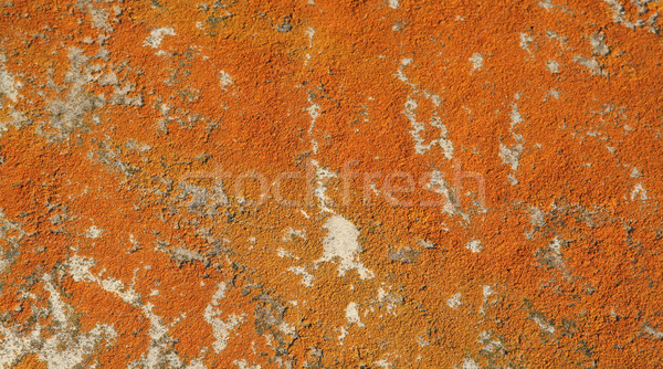 Orange Mold on a Rock
