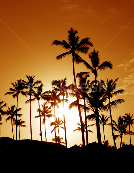 Coconut Palm Tree Silhouettes Stock photo © ca2hill