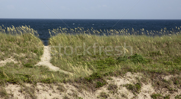 North Carolina Beach Path