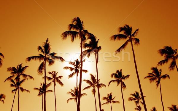 Orange Cast Palm Trees Stock photo © ca2hill