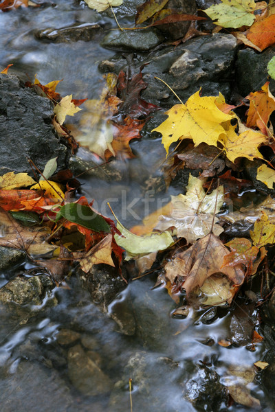Stock photo: Autumn Stream Foliage
